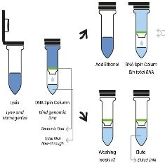 REAL DNA/RNA PURIFICATION kit - Real Laboratory