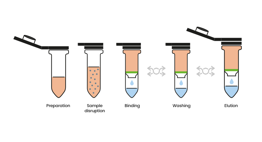 Real Fecal Microbioma Kit